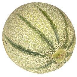 Melon, GROS calibre