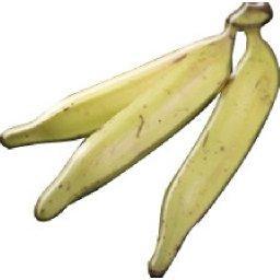 Bananes PLANTAIN conditionnée