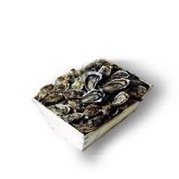 Huîtres fines de claire MARENNES OLERON N°2