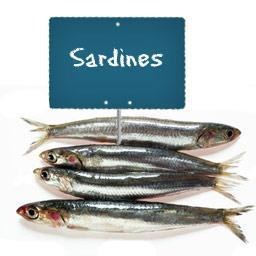 Sardine (poisson entier)