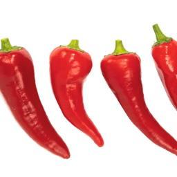 Papryka peperoni czerwona