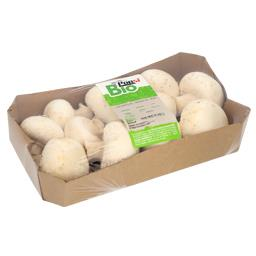 Bio cogumelos branco
