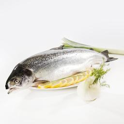 Salmão (6/7 kg)inteiro fresco