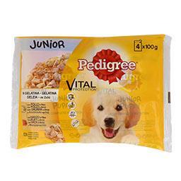 Alimento húmido cão gelatina júnior