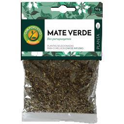 Chá mate verde planta